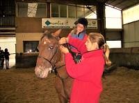 Cours équitation, initiation.