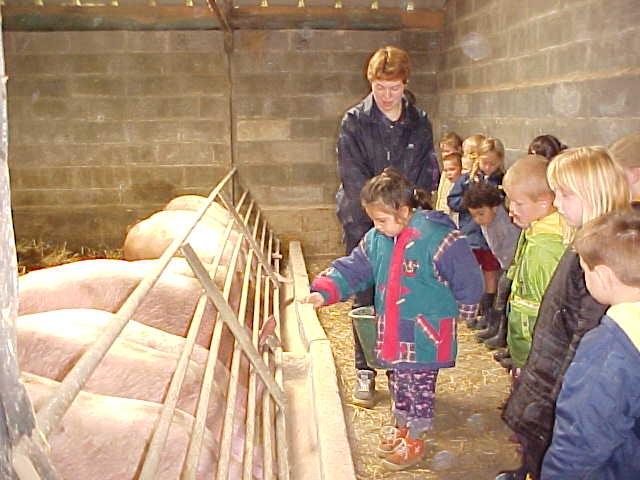 Les enfants nourissent les cochons.